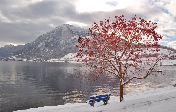 Picture winter, mountains, river, tree, bench