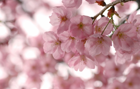 Picture the sky, macro, trees, flowers, branches, branch, spring, petals, Sakura, pink, flowering