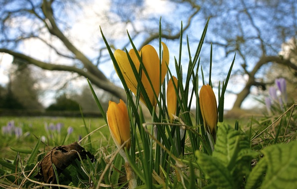 Picture PETALS, FOREST, NATURE, GRASS, FOCUS, The SKY, CLOUDS, LEAVES, FLOWERS, MACRO, SPRING, GLADE, TREES, BRANCHES, …
