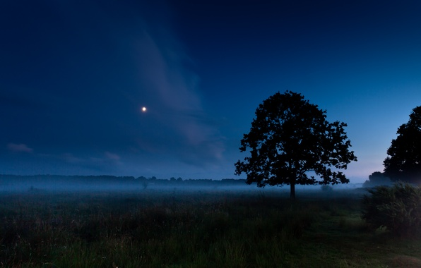 Wallpaper Field, Summer, Night, Fog, Tree, The Moon Images