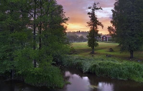 Picture trees, river, Sweden, Sweden, Närke, Stockås