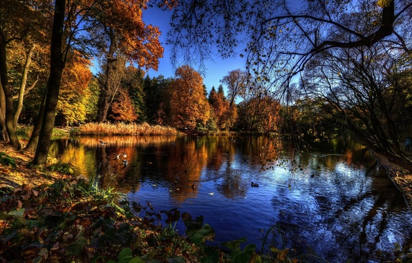 Picture trees, water, autumn, lake, birds, branches