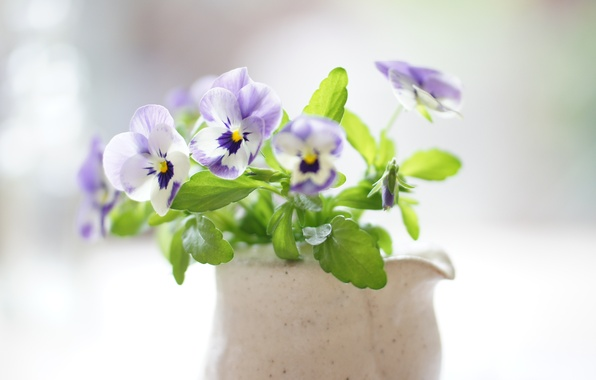 Picture bouquet, Pansy, Sunny, viola