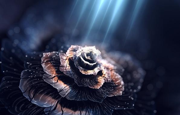 Picture flower, light, petals, illuminates