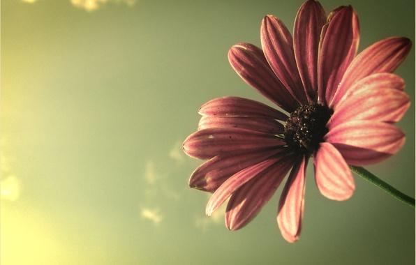Picture flower, the sky, macro, rays, light, plant, petals, flower, colours
