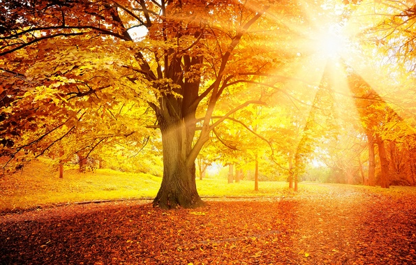 Picture autumn, forest, leaves, the sun, tree, autumn, leaves