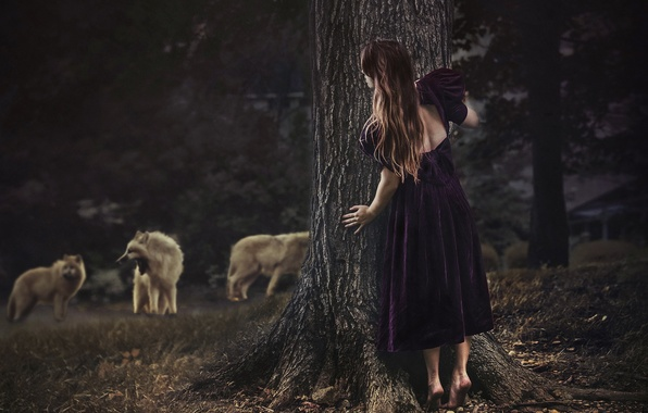 Picture forest, girl, wolves