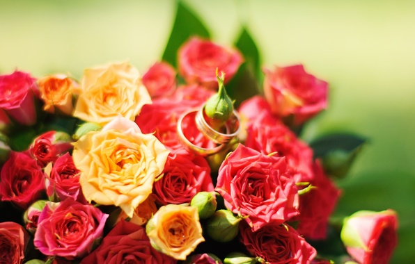 Picture flowers, roses, yellow, red, red, rose, yellow, flowers