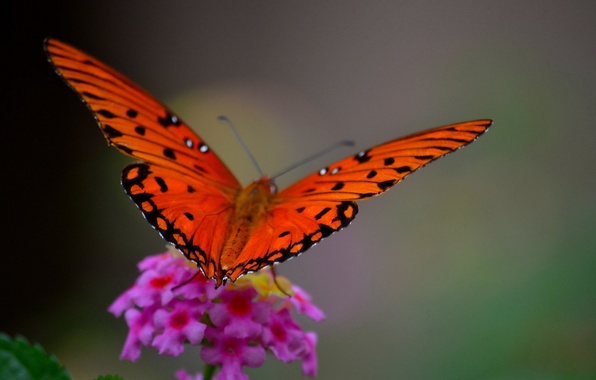 Picture flower, macro, butterfly