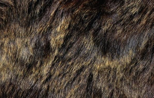 texture fur animal background - photo #5