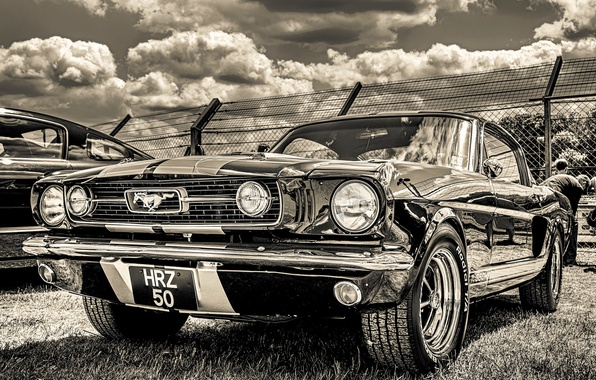 Picture Ford Mustang, 1965, the front, GT350H