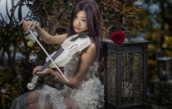 Picture girl, mood, violin, rose, lantern, Asian