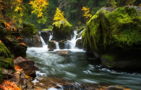 Picture autumn, forest, trees, river, stones, rocks, moss, stream