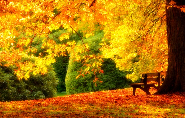Picture autumn, grass, leaves, trees, bench, nature, Park, colors, hdr, grass, walk, forest, road, trees, nature, …