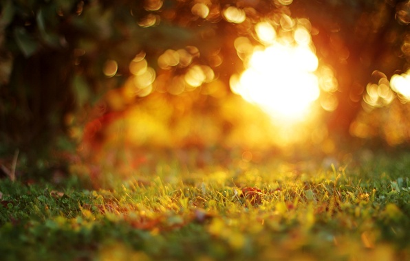 Photo wallpaper macro, nature, trees, leaves, blur, bokeh, the evening, grass, autumn, sunset