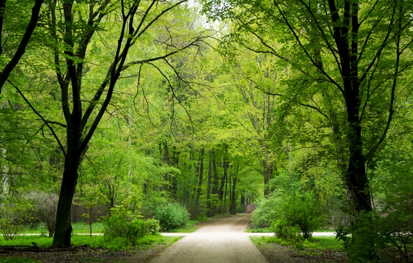 Picture greens, forest, summer, trees, nature, Park, Wallpaper, Germany, Berlin