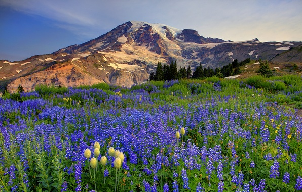 Picture the sky, clouds, snow, trees, flowers, mountains, nature, meadow