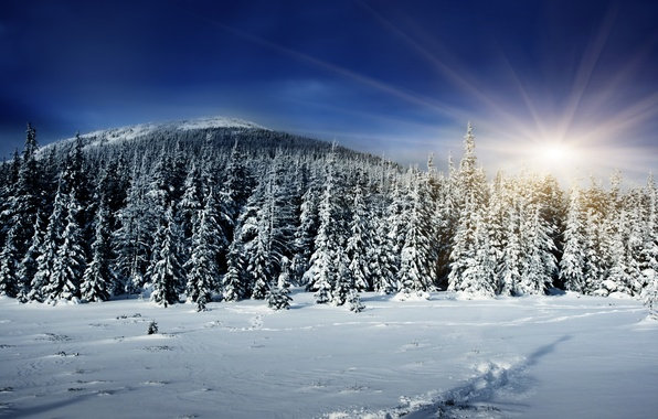 Picture winter, forest, the sun, rays, snow, shadow, hill, tree