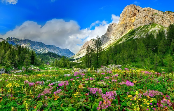 Picture forest, the sky, clouds, trees, flowers, mountains, nature, stones, rocks, valley, house