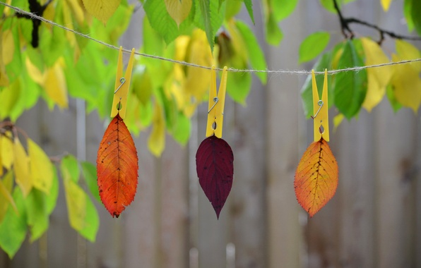 Picture autumn, leaves, nature, paint, rope, clothespin