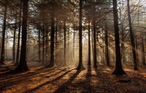 Picture autumn, forest, the sun, rays, shadows