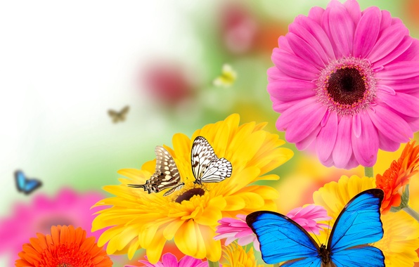 Picture butterfly, flowers, spring, colorful, flowers, spring, bright, butterflies, gerbera