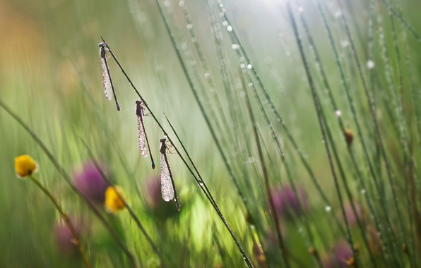 Picture grass, macro, flowers, insects, dragonflies