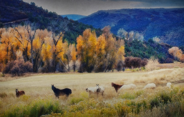 Picture autumn, the sky, trees, mountains, horse