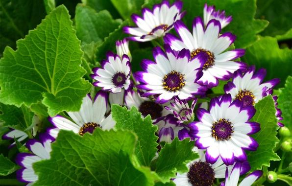 Picture leaves, flowers, nature, hem