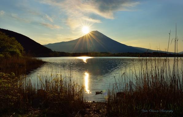 Picture the sun, lake, the volcano, reed, duck, Yoko Okamoto