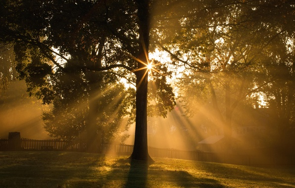 Picture light, tree, morning