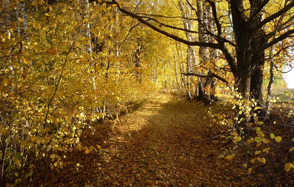 Picture road, autumn, leaves, trees, birch, grove