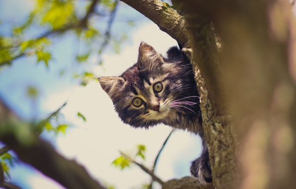 Picture cat, tree, Koshak, Tomcat