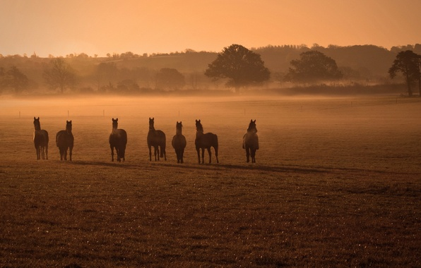 Picture field, fog, horses