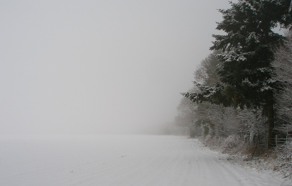 Picture winter, forest, snow, trees, nature, tree, new year, Blizzard