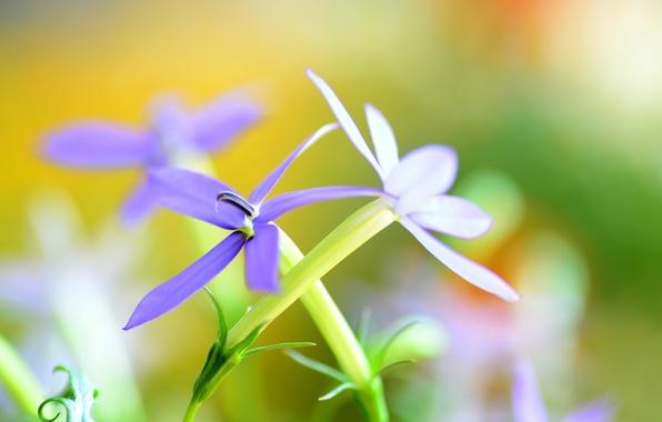 Picture leaves, flowers, nature, plant, petals