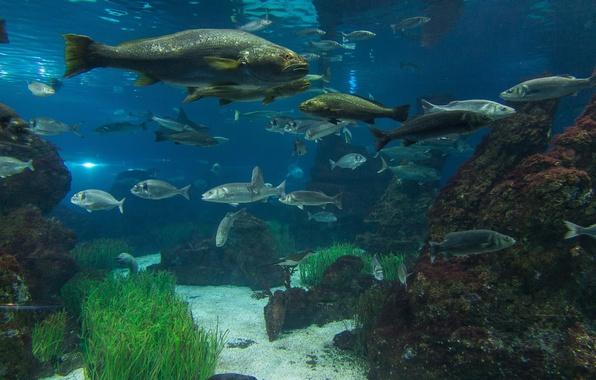 Picture water, algae, stones, aquarium, fish
