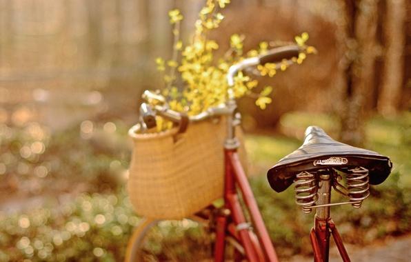 Picture flowers, bike, petals, bokeh