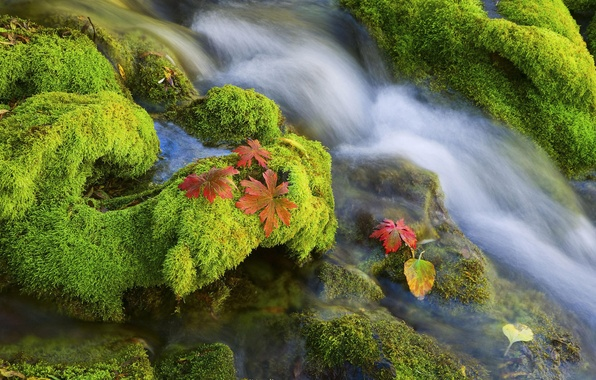 Picture water, stones, moss
