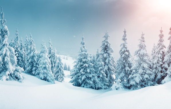 Picture winter, forest, snow, snowflakes, tree, nature, winter, snow
