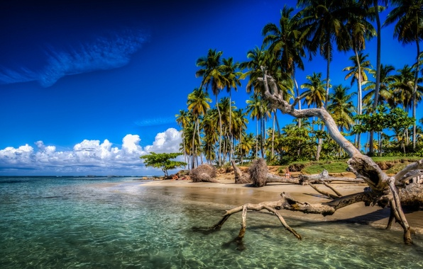 Photo Wallpaper Tropics Palm Trees The Ocean Coast Snag Atlantic