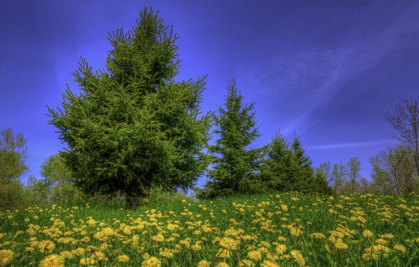 Picture the sky, grass, trees, flowers, blue, glade, yellow, dandelions, lawn
