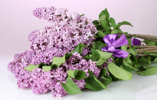 Picture leaves, flowers, branches, spring, purple, bow, lilac