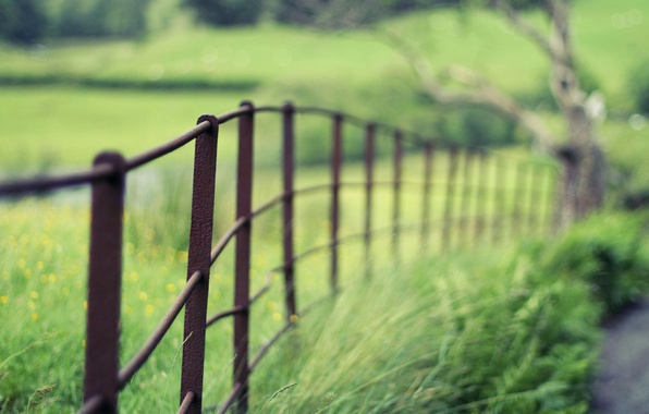 Picture greens, macro, nature, Wallpaper, the fence, blur, the fence, wallpaper, widescreen, background, macro, full screen, …