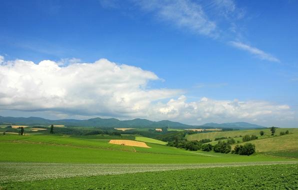 Picture greens, summer, clouds, horizon, Landscape, landscape, nature