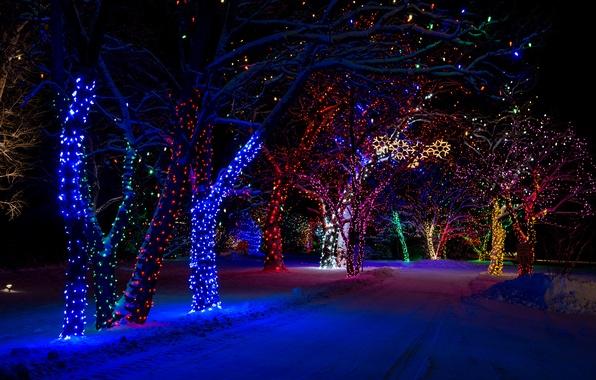 Picture winter, snow, night, nature, lights, tree