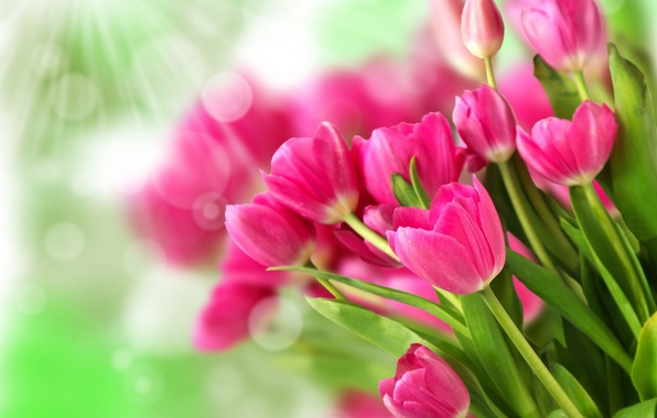 Picture flowers, pink, bouquet, tulips