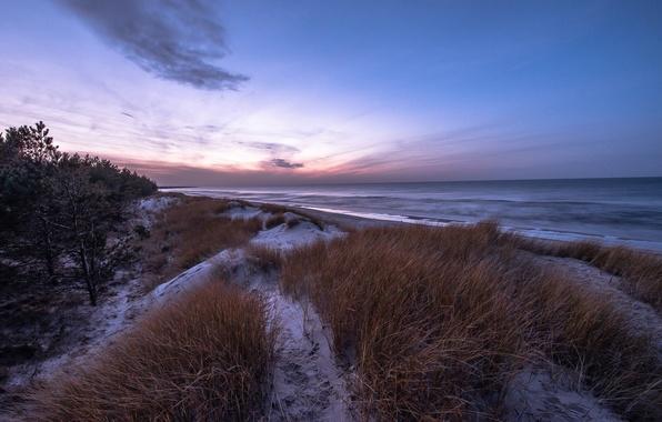 Picture winter, sea, beach, grass, snow, pine