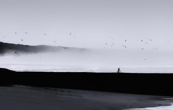 Picture sea, landscape, birds, fog, people, minimalism