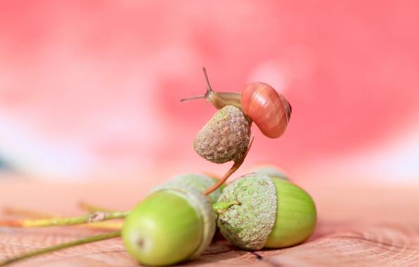 Picture macro, background, snail, acorns